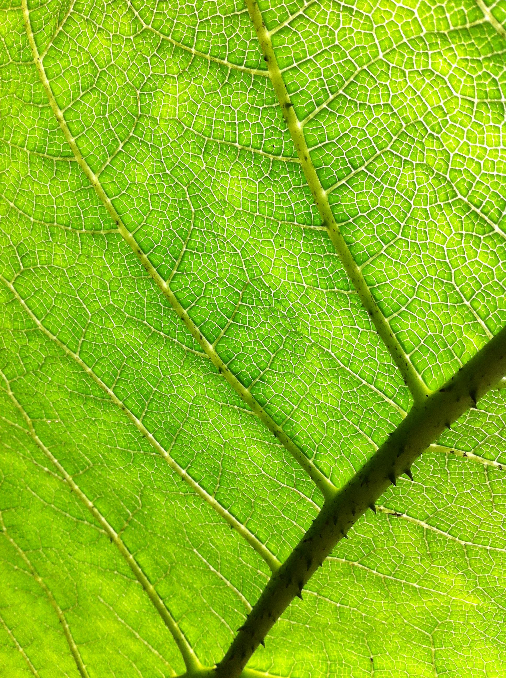 Forest Structures / Waldstrukturen - Light Paths #1. CiCi Blumstein 2012