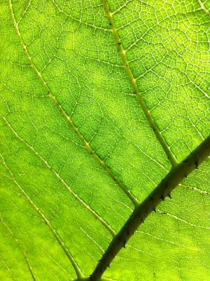 Forest Structures / Waldstrukturen: Light Paths #1. Photo: CiCi Blumstein 2012